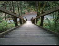 Alter Ego Fitness Experience - Victoria - Outdoor Class - Lattoria Creek Park Stairs